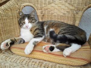 Bild Oberpartenhauserhof Katze