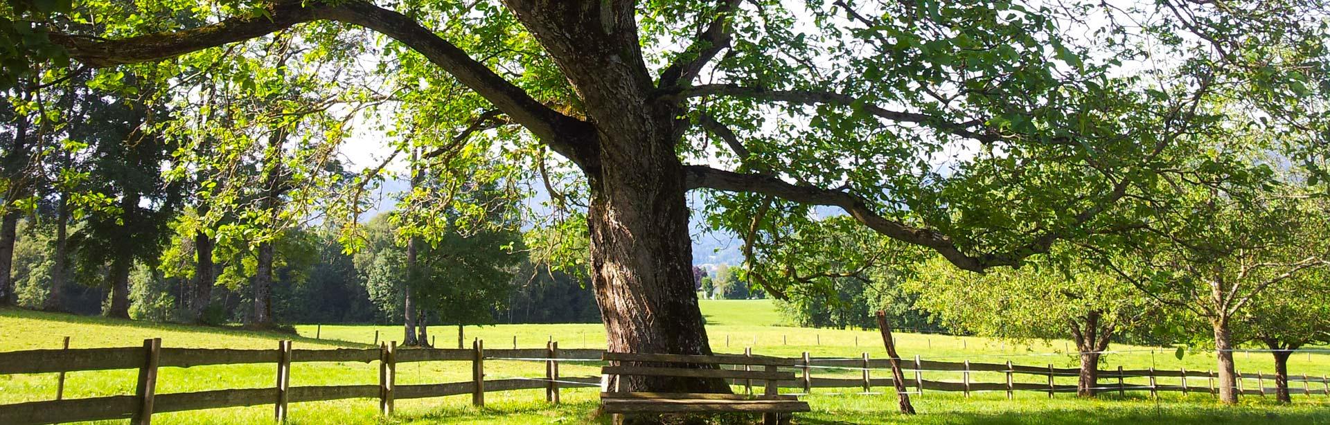 Bild Baum beim Oberpartenhauser