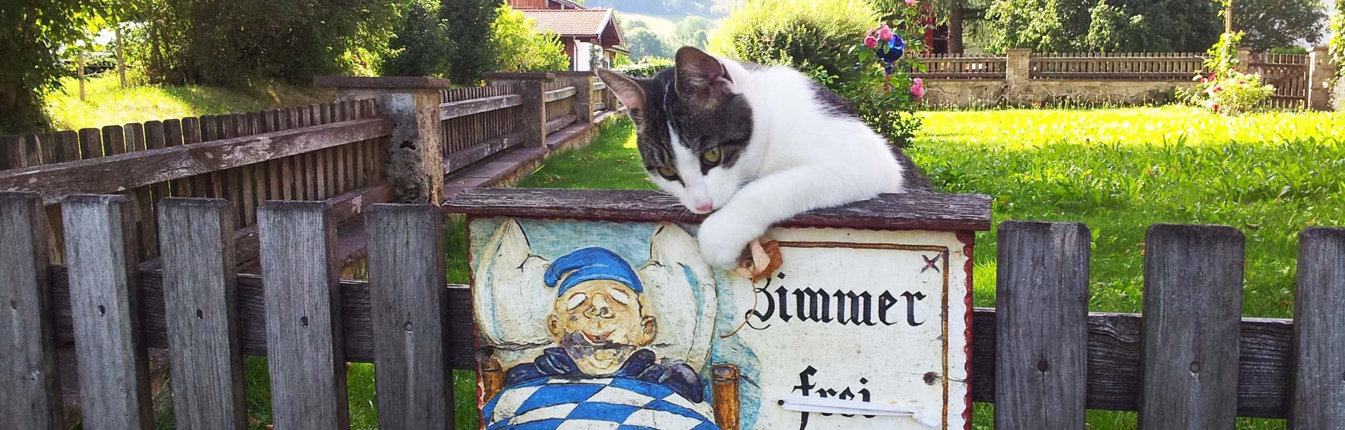 Bild Katze auf Zaun